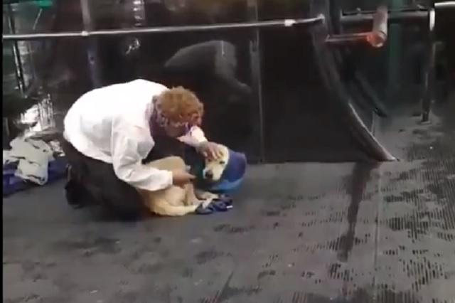 Se despoja de su chaleco para abrigar a perrito callejero