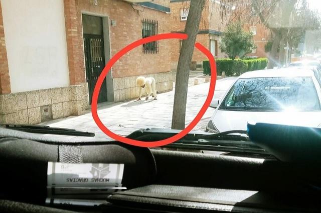 En España, hombre se disfraza de perro para evitar cuarentena