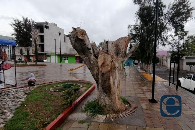 Por hongo negro derriban 22 árboles en parque de Tehuacán