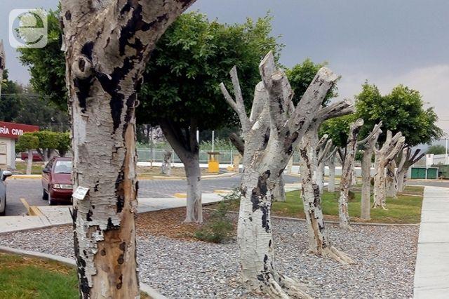 UNAM crea proyecto para salvar arboles de Tehuacán