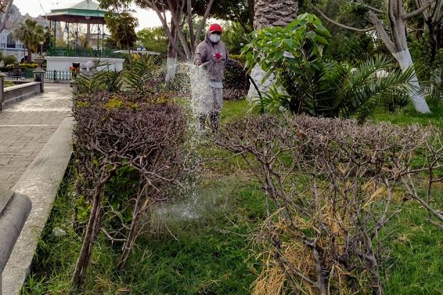 Prolifera hongo negro en parque Juárez de Tehuacán