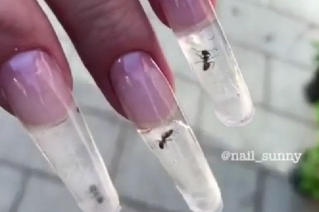 Meten hormigas vivas en uñas de acrílico y comparten video