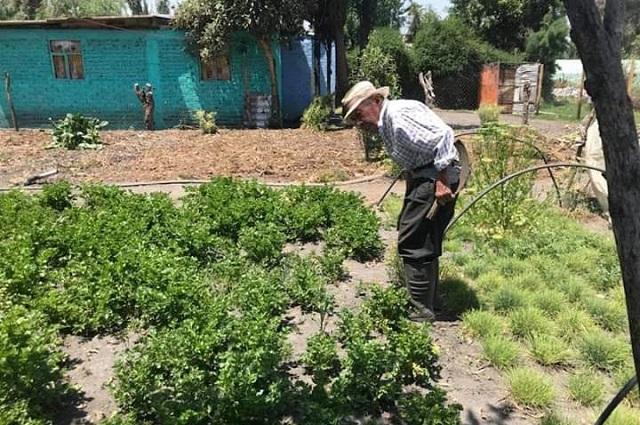 Productores de Tehuacán venden hortalizas casa por casa