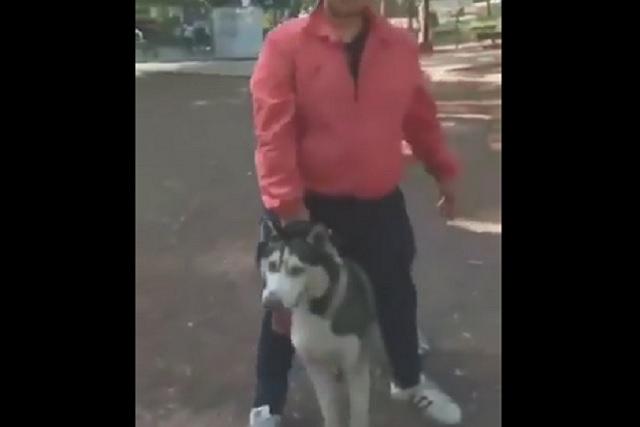 Husky mata a Pomerania en parque de la Ciudad de México