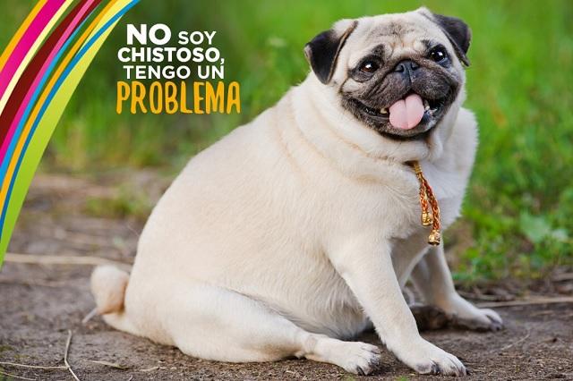 ¿Cómo identificar el sobrepeso en perros?