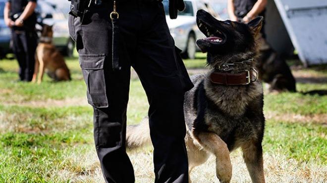 Caninos detectan peluche con aparente droga en central de autobuses