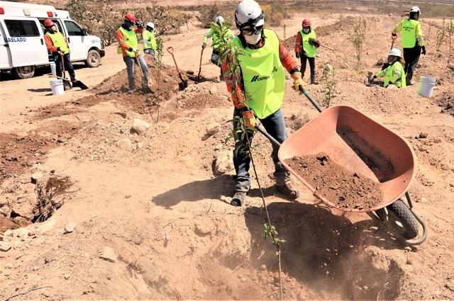 CEMEX reforesta cantera en Puebla