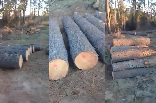 VIDEO Por tala dañan santuario de luciérnagas en Tlahuapan