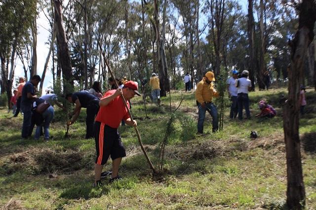 Siembran SDRSOT y vecinos  2 mil 500 árboles en el cerro de Amalucan