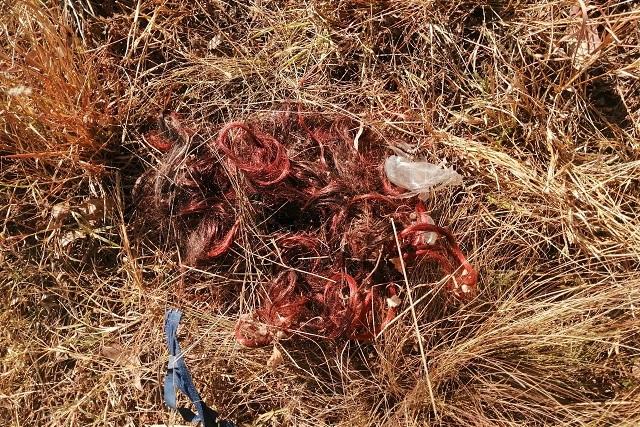 Una peluca hizo creer que había restos humanos, en Puebla
