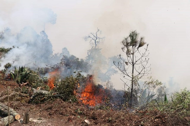 Incendio en Zautla causa daños a 100 hectáreas