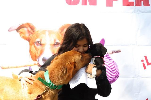 Exitosa campaña de adopción de mascotas en San Pedro Cholula
