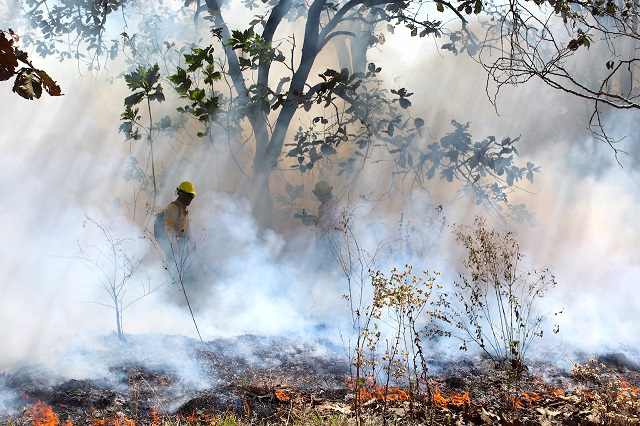 Incendios forestales se intensifican en abril y mayo alerta Conafor