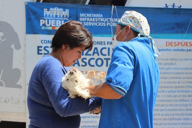 Jornadas del ayuntamiento poblano para esterilización de mascotas