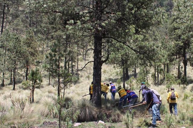 Advierten daños al bosque con mina de Ixtacamaxtitlán