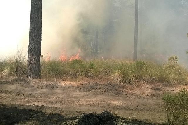Puebla a la baja en incendios forestales a nivel nacional