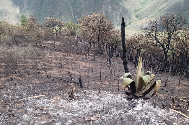 Caída de rayo provoca incendio en la Sierra Negra