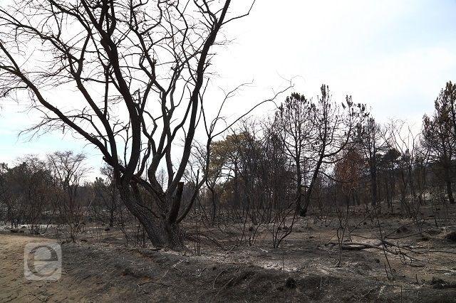 Puebla, quinto lugar con más incendios forestales