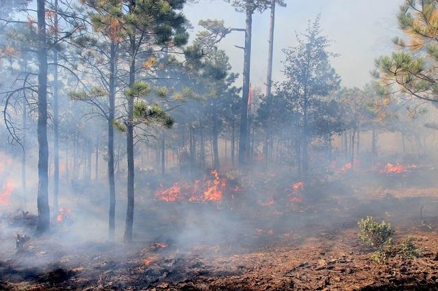 ¿Qué factores influyen en los incendios?