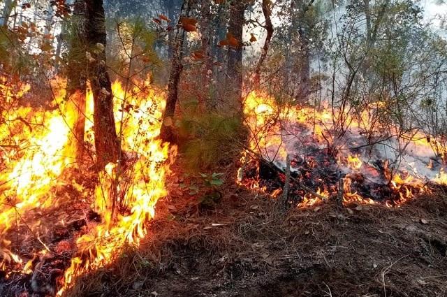 Cuatro incendios en Zautla y Cuyoaco consumen 387 hectáreas de bosque