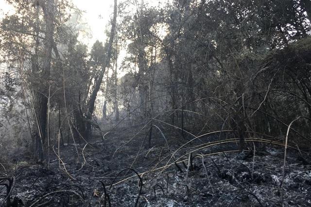 Incendio consume 100 hectáreas en zona boscosa de Huauchinango