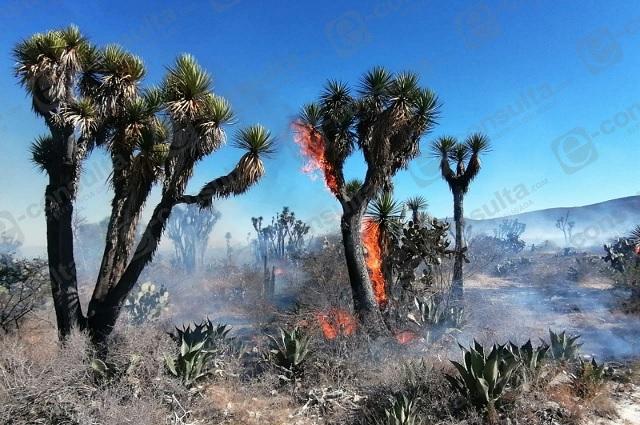 Reserva de la biósfera bajo amenaza por incendios forestales en 2021