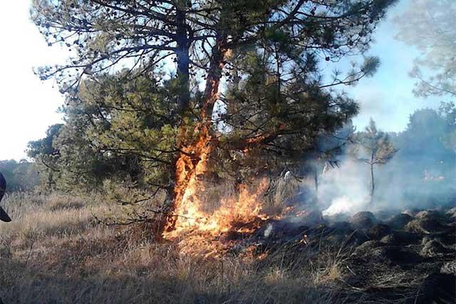 Reporta Conafor 296 incendios forestales en el primer trimestre