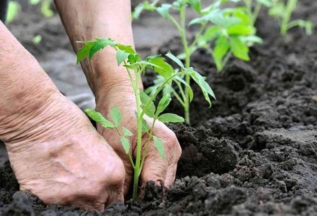 Ingenieros agrícolas, pieza clave para alimentar a la población