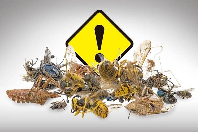 Posible colapso ambiental por disminución de poblaciones de insectos