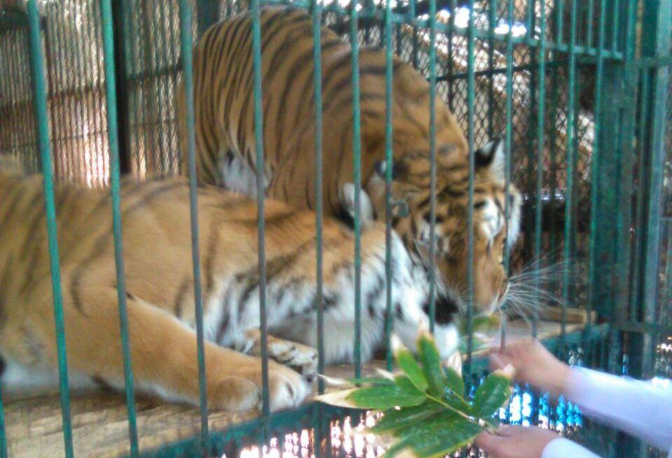 Profepa mantiene abierto proceso contra zoo de Gómez Olivier