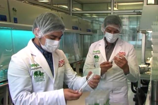"""Desarrolla INIFAP """"clones"""" de plántulas de cacao mejorados"""