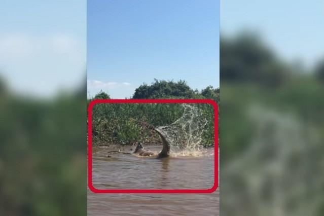 Video: La brutal, feroz y ¿mortal? pelea entre un caimán y un jaguar