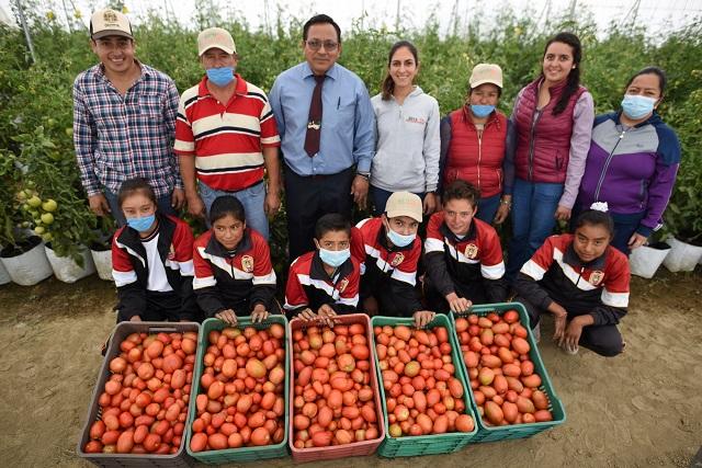 Invernadero de jitomate que apoya GCM beneficia a 54 familias en Xaltipanapa