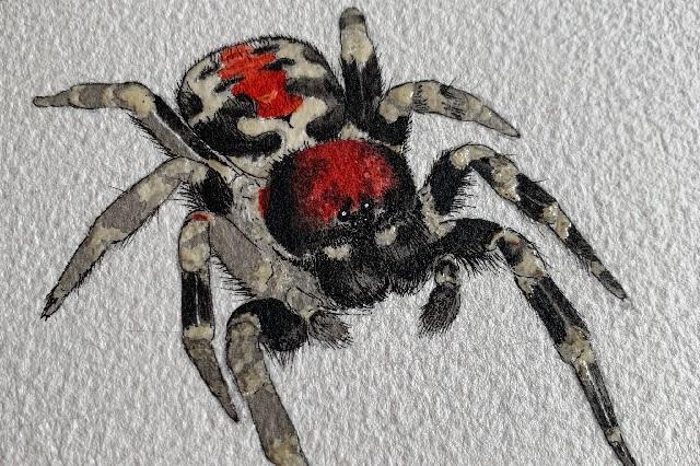 Científicos descubren araña parecida al Joker y la nombran Joaquín Phoenix