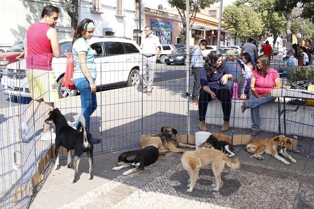Piden activistas proyecto integral para evitar animales callejeros