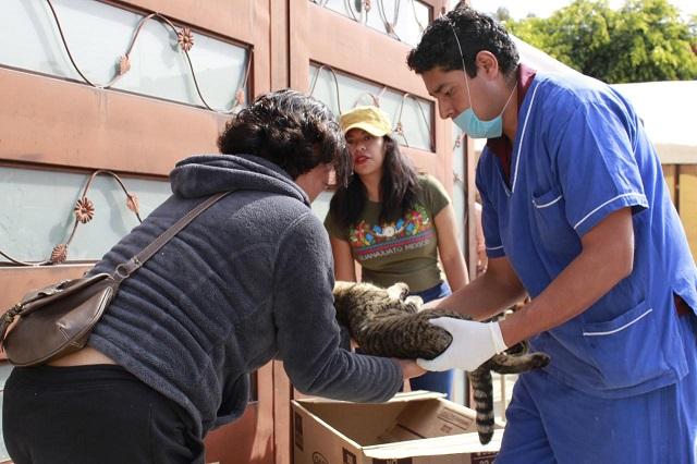 Realizan jornadas de vacunación y esterilización canina en Puebla