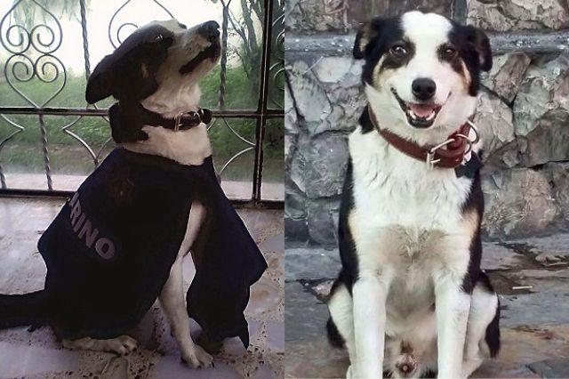 Se busca perro callejero ejemplar en Atlixco para inmortalizarlo