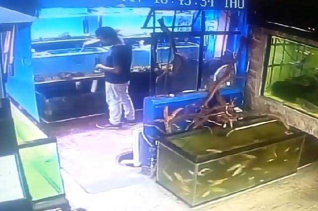 Sujeto roba peces de un acuario y se los lleva en las bolsas del pantalón
