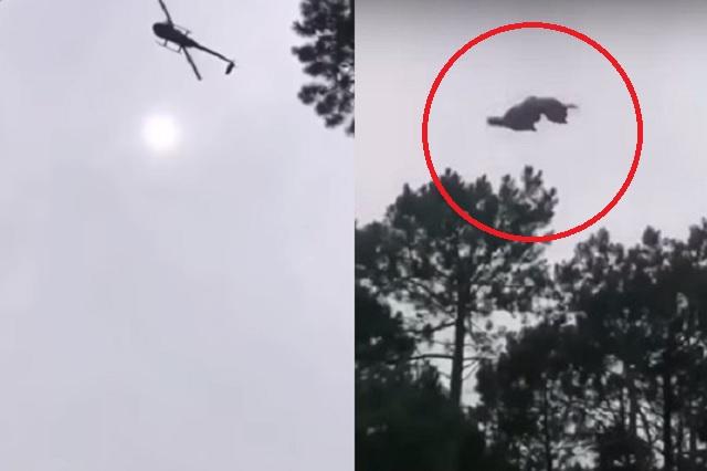 Pareja de actriz y empresario lanzan un cerdo desde su helicóptero