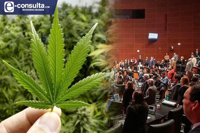 Senado de la República legaliza la Marihuana
