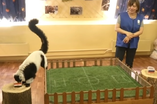 Lemur Spartak presagió victoria de Rusia y augura otra sorpresa mundial