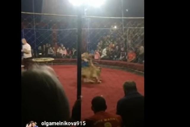 VIDEO Leona ataca y le muerde la cabeza a una niña en circo