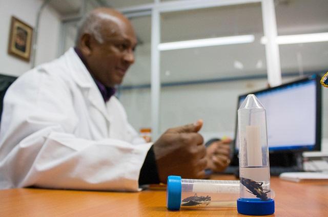 Covid-19 e influenza complicarán diagnóstico de dengue en Puebla