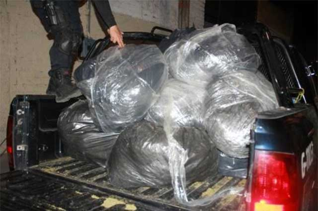 Hallan 123 kg de marihuana en lote baldío de Guadalajara