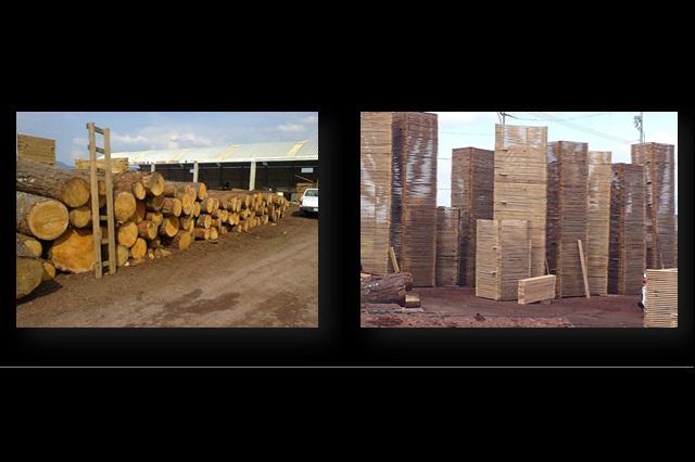 Clausuran 3 aserraderos y decomisan madera en frontera Puebla-Hidalgo