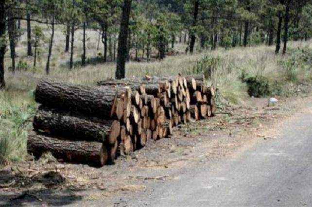 Asegura Profepa camión con madera en bosque de Zacapoaxtla
