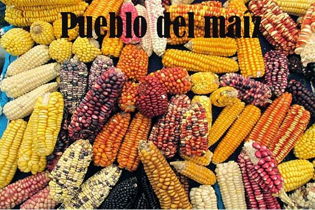 Maíz blanco, cultivo estratégico por su importancia alimentaria en México