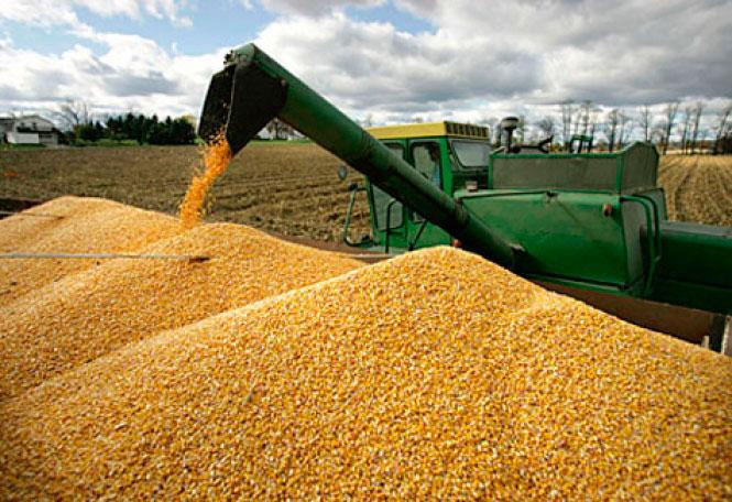 México analiza aplicarle aranceles al maíz y a la soja