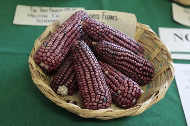 4 beneficios del maíz y qué enfermedades combate