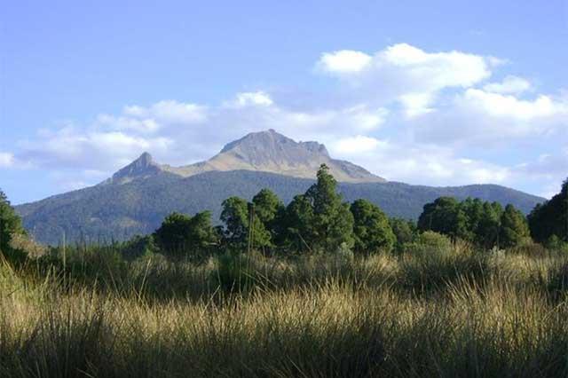 Deforestación de La Malinche supera la media nacional, advierte senadora